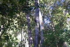 Austin, crique, état, récréation, secteur, - garez entourer un secteur de région sauvage Il est situé dans le comté de Sonoma photographie stock libre de droits