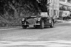 AUSTIN HEALEY 100/4 1956 Royaltyfri Fotografi