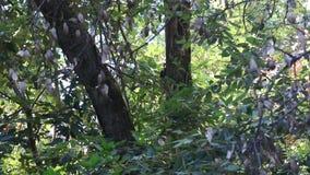 Austin, Kreek, Staat, Recreatie, Gebied, - parkeer het omvatten van een geïsoleerd wildernisgebied woodpecker stock video