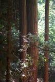 Austin, Kreek, Staat, Recreatie, Gebied, - parkeer het omvatten van een wildernisgebied Het wordt gevestigd in Sonoma-Provincie royalty-vrije stock afbeelding