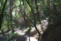 Austin, Kreek, Staat, Recreatie, Gebied, - parkeer het omvatten van een wildernisgebied Het wordt gevestigd in Sonoma-Provincie royalty-vrije stock fotografie