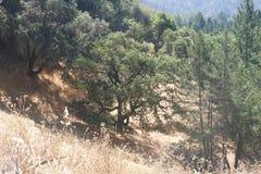 Austin, Kreek, Staat, Recreatie, Gebied, - parkeer het omvatten van een wildernisgebied Het wordt gevestigd in Sonoma-Provincie royalty-vrije stock foto