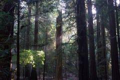 Austin, Kreek, Staat, Recreatie, Gebied, - parkeer het omvatten van een wildernisgebied Het wordt gevestigd in Sonoma-Provincie stock afbeelding