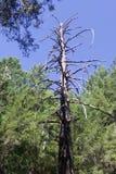 Austin, Kreek, Staat, Recreatie, Gebied, - parkeer het omvatten van een wildernisgebied Het wordt gevestigd in Sonoma-Provincie stock foto