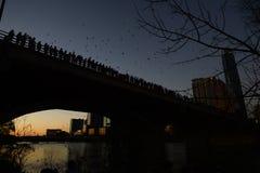 Austin Texas bats stock photo