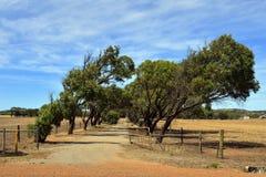 Austrália, Austrália Ocidental, exploração agrícola Imagens de Stock