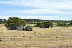 Austrália, Austrália Ocidental, natureza, árvore de inclinação Imagens de Stock
