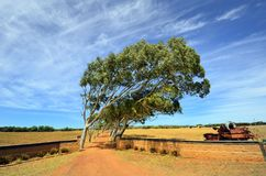 Austrália, Austrália Ocidental, natureza Fotografia de Stock Royalty Free