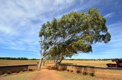 Austrália, Austrália Ocidental, natureza Imagens de Stock