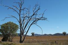 Austrália rural Imagem de Stock Royalty Free