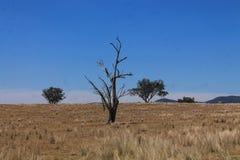 Austrália seca Fotografia de Stock