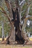 Austrália, Sul da Austrália, natureza, árvores Fotografia de Stock