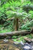 Austrália tropical Foto de Stock