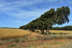 Austrália, WA, agricultura Imagem de Stock Royalty Free