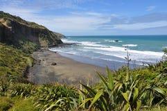 Australasian Gannet, παραλία Muriwai, βόρειο νησί, Νέα Ζηλανδία Στοκ Εικόνες