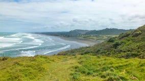 Australasian Gannet, Muriwai plaża, Północna wyspa, Nowa Zelandia Zdjęcie Royalty Free