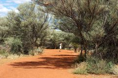 Australië, onbekende mens die in de weg in centrum van Australië, één mens op de struikachtergrond, populaire plaats Uluru in Aust Royalty-vrije Stock Fotografie