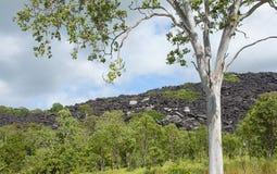 Australië, Zwarte Mountian stock afbeelding