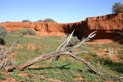 Australia. Old tree Stock Photography