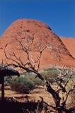 Australia. Tree at the olgas Stock Photos