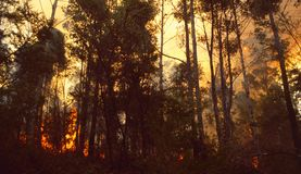 Free Australia: A Bush Fire Destroying Trees And Plants And Animals Stock Photos - 162616863