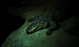 Crocodile display in zoo royalty free stock photo