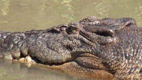 Australia, alligator river, kakadu, Alligator rests on the bank of the River observing us stock video footage