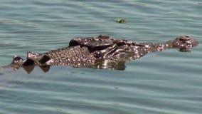 Australia, alligator river, kakadu, Alligator marine crocodile called salty, emerging, watching us pass by stock footage