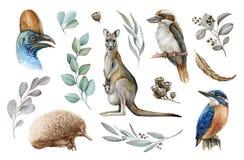 Australia animal and bird watercolor set. Hand drawn kangaroo, kookaburra, echidna, kingfisher, cassowary, eucalyptus