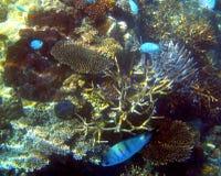 australia bariery korale łowią wielką rafę Zdjęcia Stock