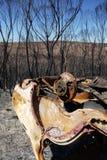 Australia bush fire: burnt car wreck detail stock photos