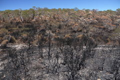 Australia bush fire: burnt hillside h Stock Images