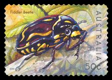 AUSTRALIA - Postage stamp. AUSTRALIA - CIRCA 2003: A used postage stamp from Australia, depicting an illustration of a Fiddler Beetle, circa 2003 stock photography
