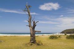 Australia, Coast in NSW royalty free stock photos
