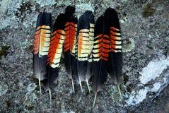 Australia: colección de plumas negras brillantes de la cacatúa Foto de archivo libre de regalías
