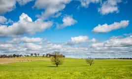 Australia countryside Stock Image