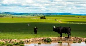Australia countryside Stock Photos