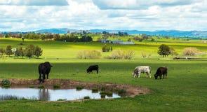 Australia countryside Stock Photography