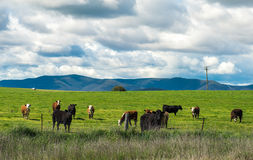 Australia countryside Royalty Free Stock Photos