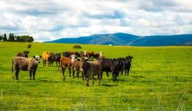 Australia countryside Royalty Free Stock Photos