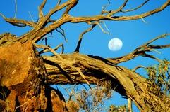 Australia del sud Fotografie Stock Libere da Diritti