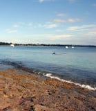 Australia Dolphin and Boats. Dolphin and boats at Jervis Bay, Australia Stock Photo