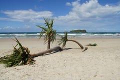 australia drzewo plażowy kapuściany zdjęcie stock