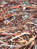 Australian bark scattered on the ground stock photo