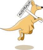 australia kangur Zdjęcie Royalty Free