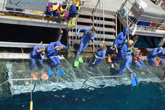 Australia, la gran barrera de coral Imagen de archivo