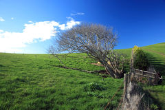 Australia Landscape. Spring Landscape - Green Field On Hill,A Green Fields View From Phillip Island.Melbourne,Australia royalty free stock image
