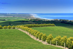 Australia Landscape. Spring landscape - green field and ocean view, Australia royalty free stock images