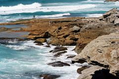 Australia man at the beach. Man and dogs waiting to play, Sydney, Australia Royalty Free Stock Photos