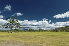 Australia meadow Stock Images